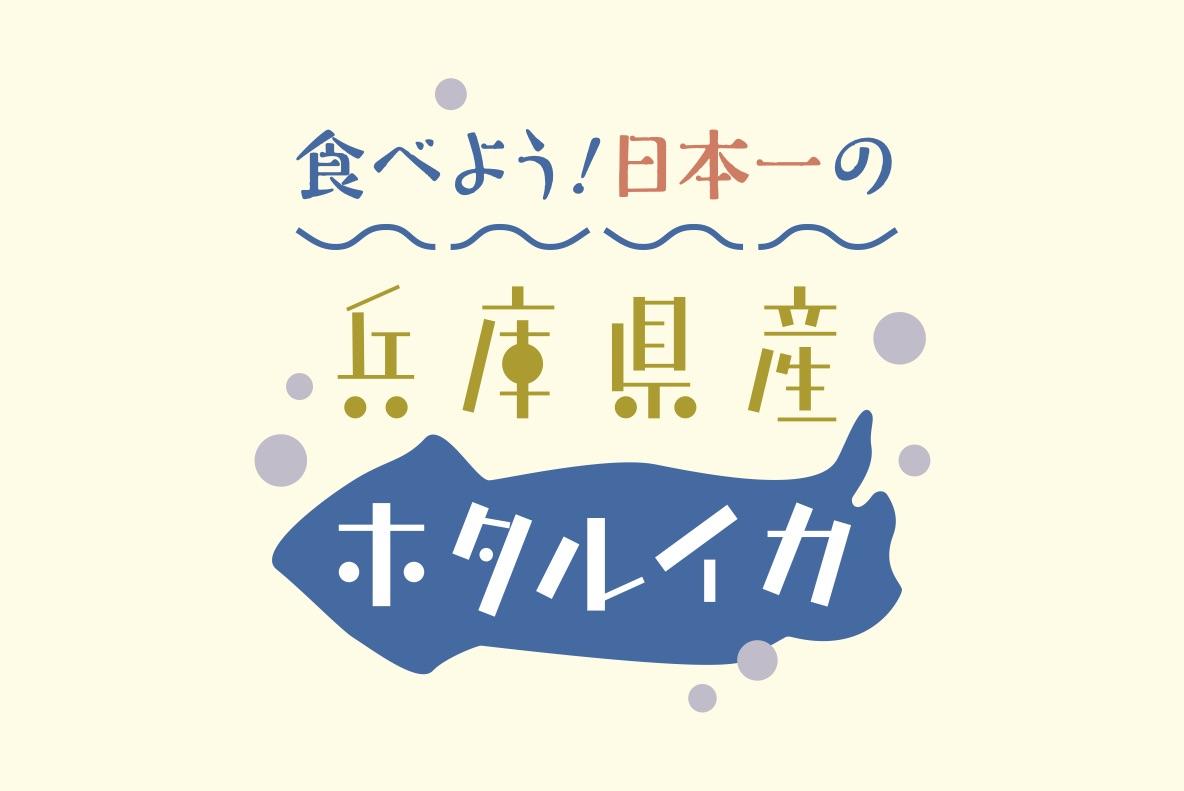 食べよう!日本一の兵庫県産ホタルイカ